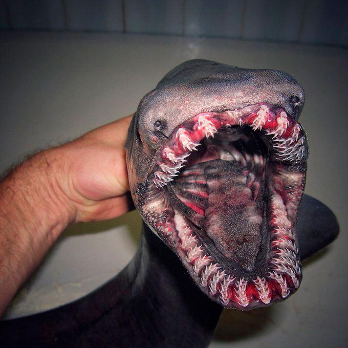 No odies a las criaturas de aguas profundas. Tienen que ser raros para sobrevivir.