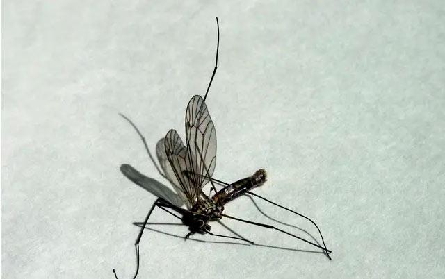 Florida: 750 millones de mosquitos «transgénicos» serán liberados en la naturaleza en 2021