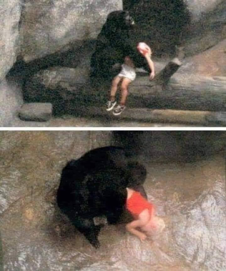 El gorila que cuidó a un niño